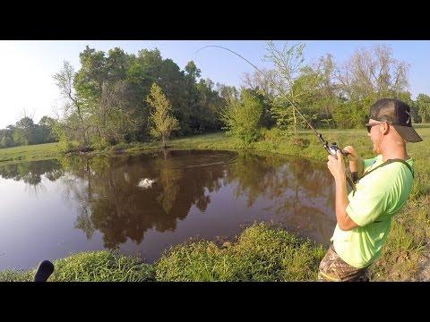 Bass Fishing Farm Ponds