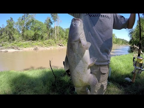 Bank Fishing For Blue Catfish