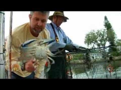 Florida Travel: Crabbing on Tampa Bay
