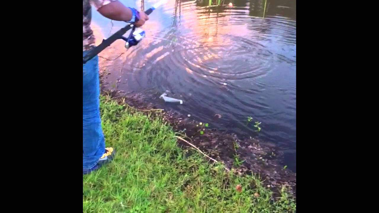 How to catch bluegills using just bread