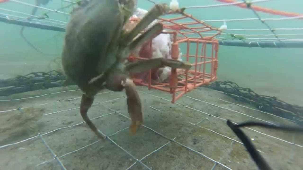 GoPro Pier Crabbing