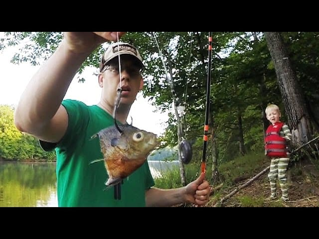 How to catch catfish from the bank – Bank fishing for catfish