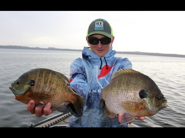 GIANT Bluegills in Public Lakes