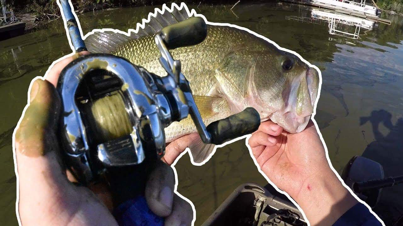 THICK GREEN water and Livingston ELECTRONIC LURES