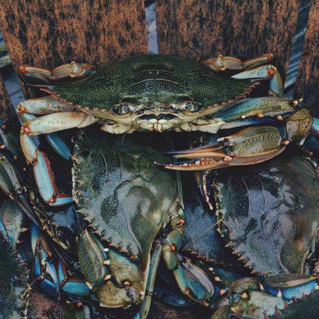 Lady Crabber – 81 Years Old