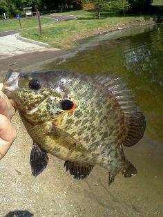 c930cc3b771d3c0c3c6675a6638827bd--carp-fishing-gone-fishing