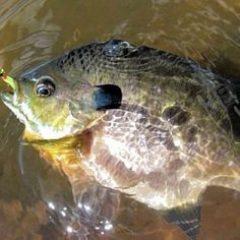 d9b777d14f4812334f7eb201f92f2ab3--fishing-tips-gone-fishing