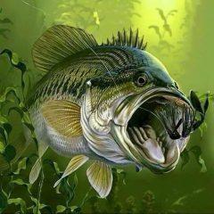f5ed5e6aa79d4919dde9a6253751e039--trout-fishing-kayak-fishing