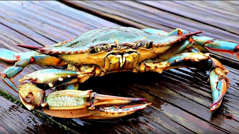 Catch and Cook - BIG CRABS!!