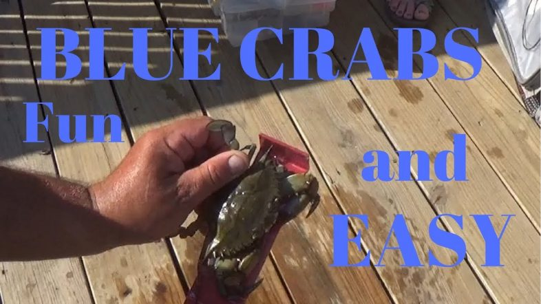 How to Catch Blue Crab Easy