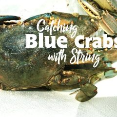 How to Catch Blue Crabs with a String | Hutch House Family | Big Adventure Fam