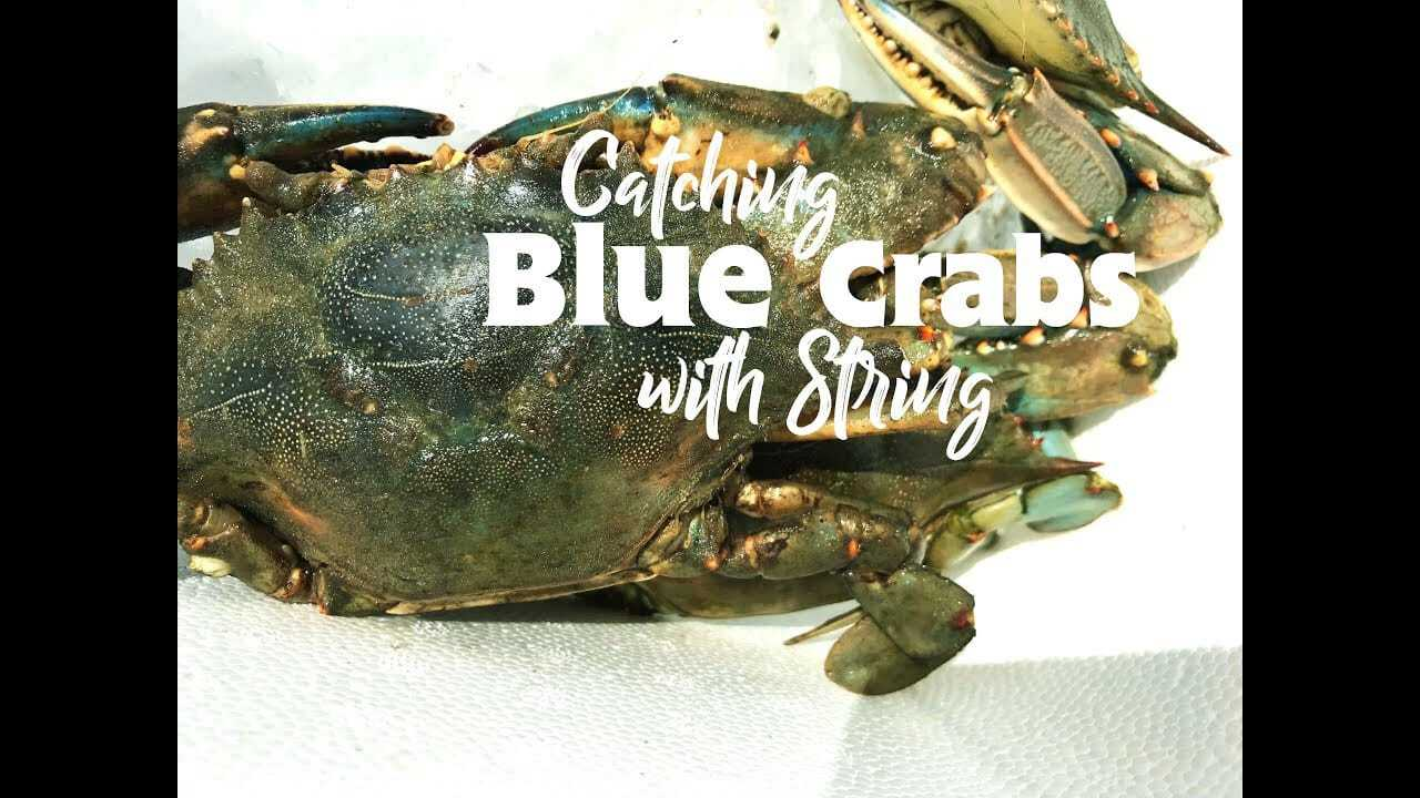 How to Catch Blue Crabs with a String Adventure